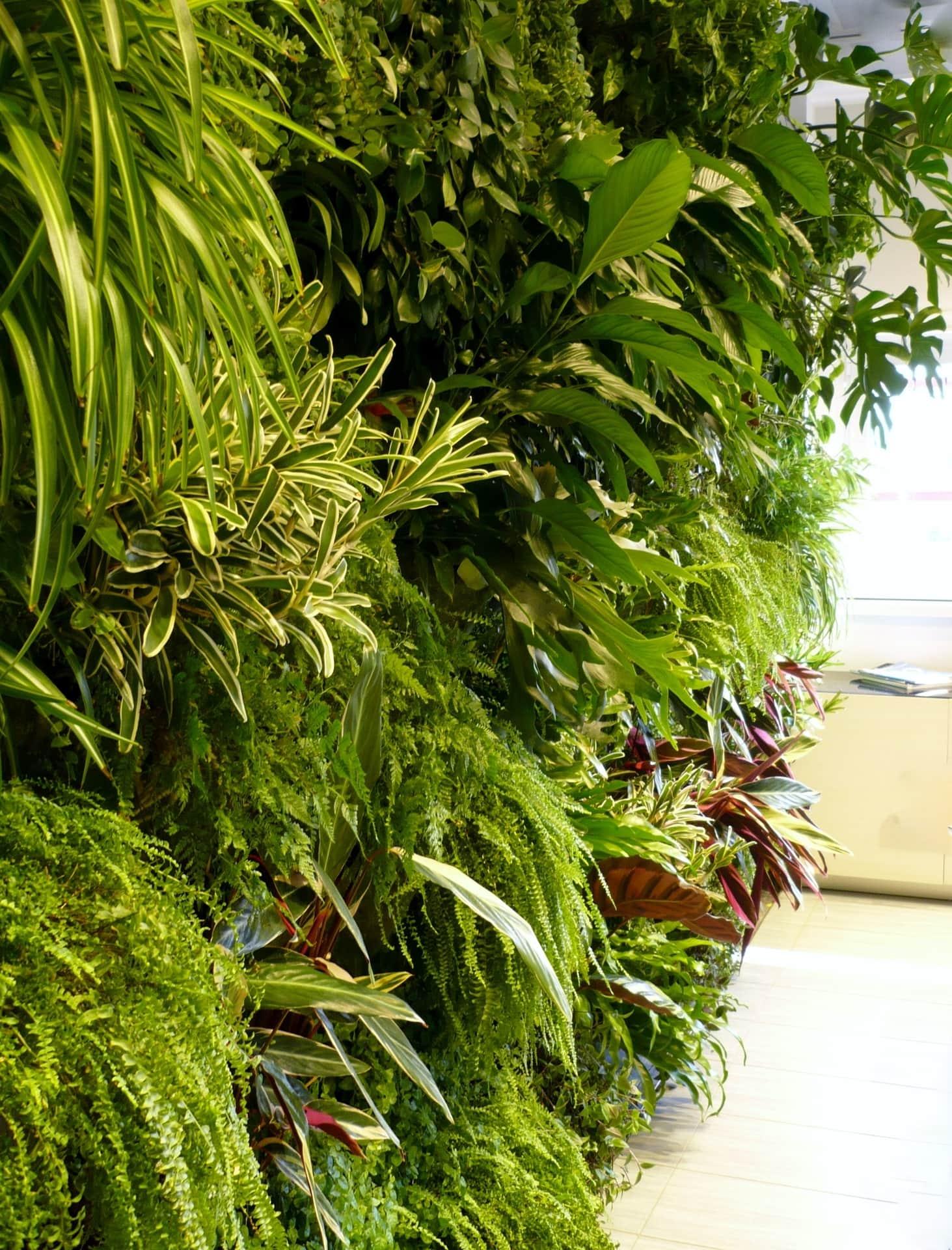Giardini verticali giardino tropicale divomi design - Giardino tropicale ...